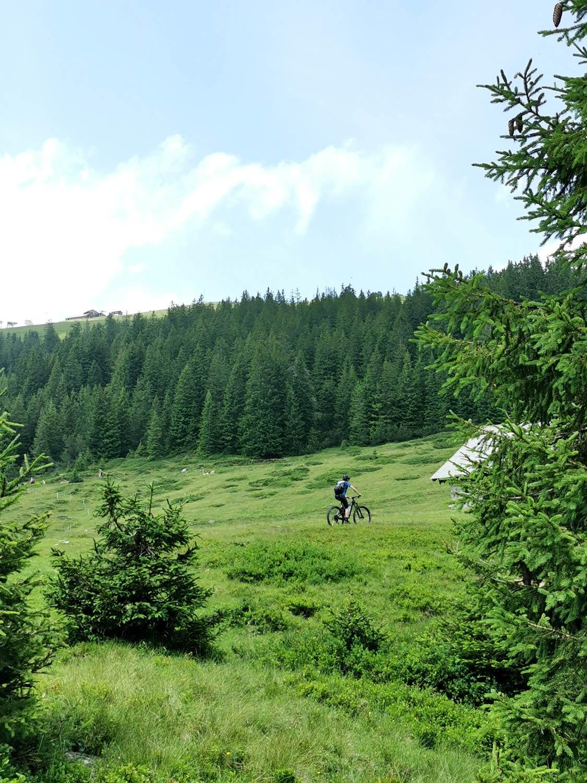 Frau fährt einen Waldweg mit dem Bike hoch